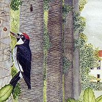 200fin_acorn_woodpeckerLittlefield3x3.jp