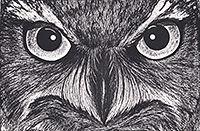 200croppedBinocular Vision-Great Horned