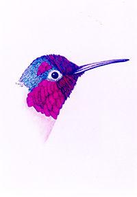 200croppedNeighborhood Birds Anna Hummin