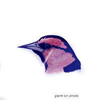 200croppedVillages Bird Families Oriole-
