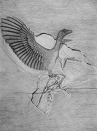 200USEArcheopteryx300dpi.jpg