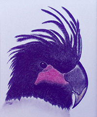 200cropped Palm Parrot.jpg