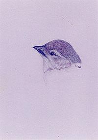 200croppedNeighborhood Birds Bushtit1990