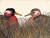 200croppedPhalaropes maybe American Bird
