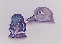 200Ehrlich Show Wood Ducks Nov 25 1989_2