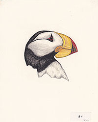 200wcroppedPuffin-Pribilof Poster_201902