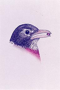 200croppedNeighborhood Birds American Ro