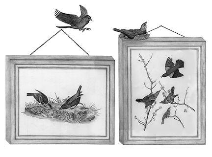 lowresUSEresizedfinalcowbird-blackbird f