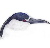 200croppedVillages Bird Families Black-c