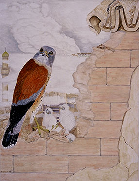 Bagdad European Kestrel Nest7566700-R01-