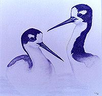 200croppedNeighborhood Birds Black-necke
