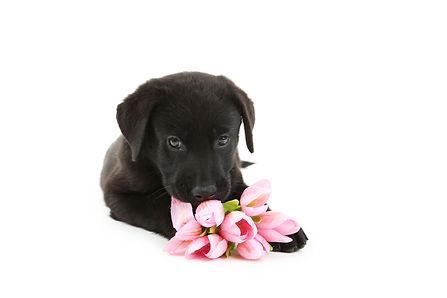 Easter Puppy.jpg