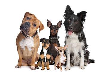 All-breed Group.jpg