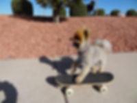 Dog Training arizona
