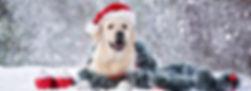 happy labrador dog in santa hat posing o