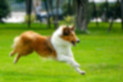 Dog Training Phoenix Arizona
