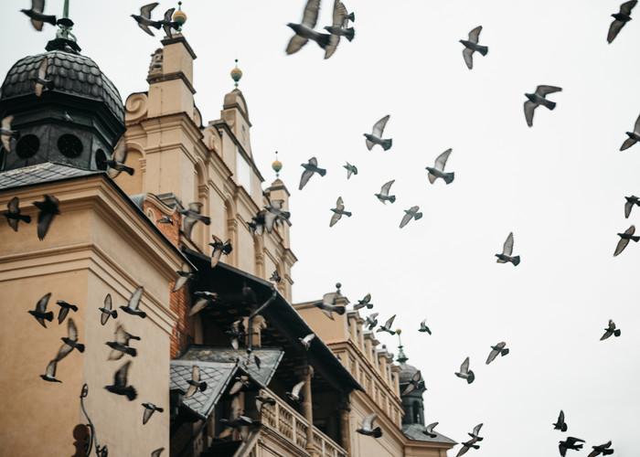 Iconic Travel Photography | Krakow, Poland | Saige Ashton Print