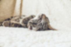 pet sitting norwich