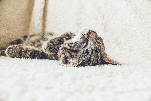 Kurs Szkolenie kotów