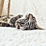 Gato en una manta suave