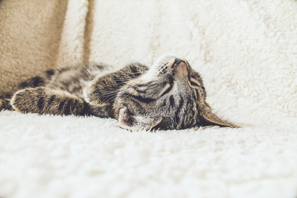A tabby cat lays on a soft cream blanket, looking relaxed.