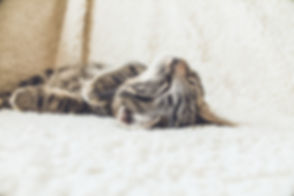 Kat op een zachte deken