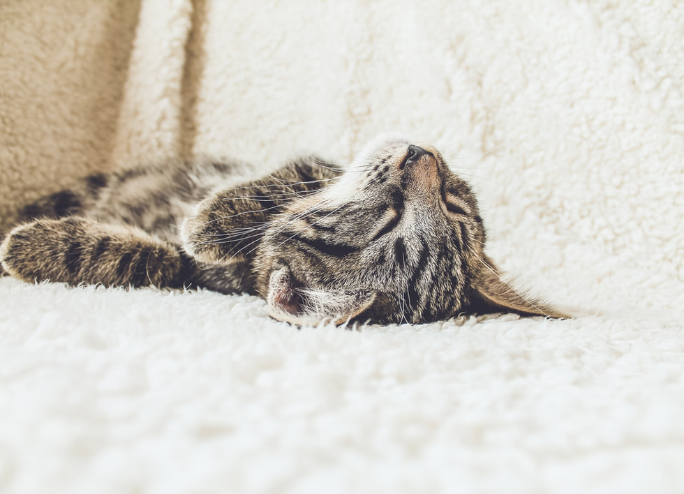 Katze auf einer weichen Decke