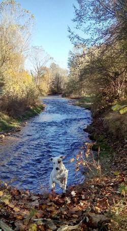 rivière de la galaure