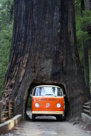 Sequoia+National+Park,+California.jpg