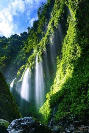 Madakaripura+Waterfall,+East+Java,+Indonesia.jpg