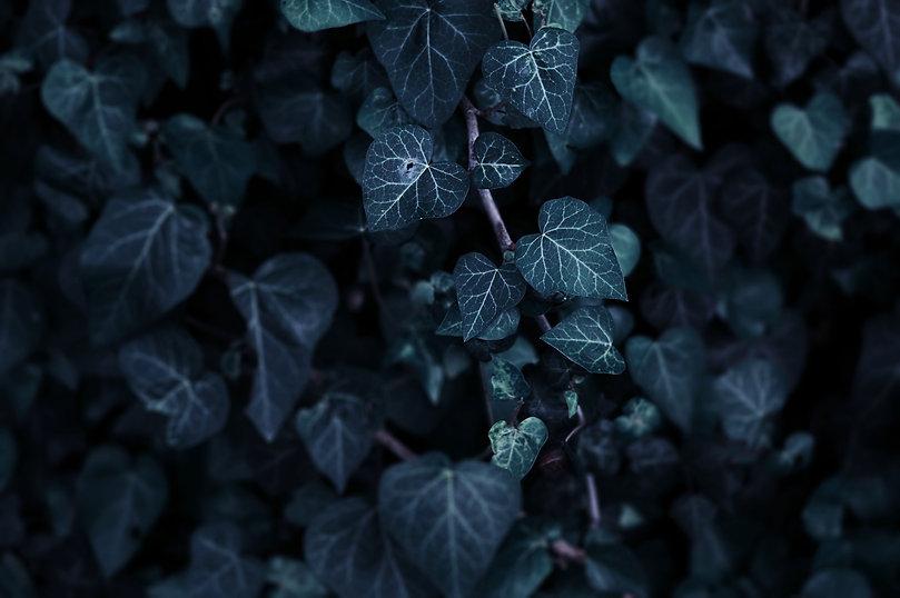 Leaves%20_edited.jpg