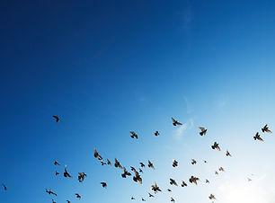 photo-birdflock.jpg