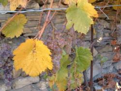 outono 2004 (7)