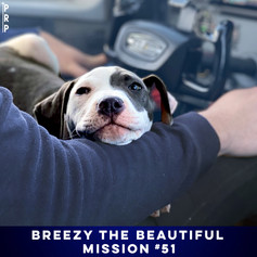 THE SHELTER ALMOST BLEW IT, BUT BREEZY GOT A SECOND CHANCE.