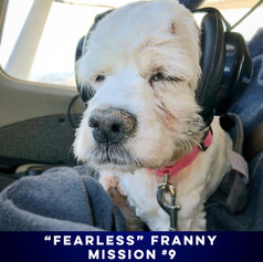 IT'S EASY TO SEE WHY WE LOVE THIS COURAGEOUS BLIND SPANIEL.
