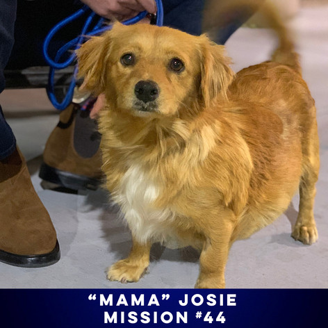 MOVE OVER PUSSYCATS, HERE COMES JOSIE AND THE PUPPIES.