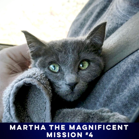HAVE YOU EVER SEEN A MORE PRECIOUS RUSSIAN BLUE? WE THINK NYET.