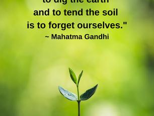 Tend the Soil