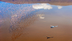 6.-Helikopter-safaris-web