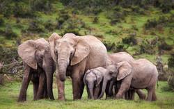 lulimbi-elephants-virunga-1