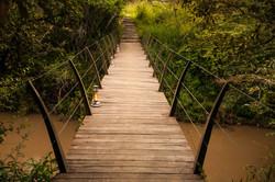 Bridge between forest and keekorok side.