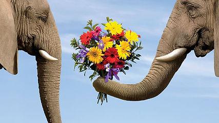 elephane.jpg