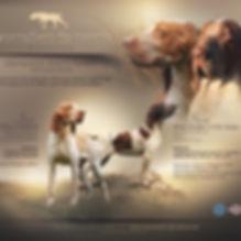 03-2020_breeders-add-B.I..jpg