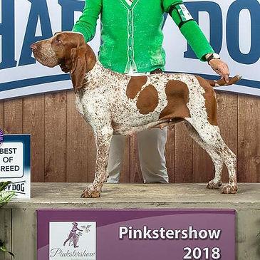 Pinkstershow-2018_edited.jpg