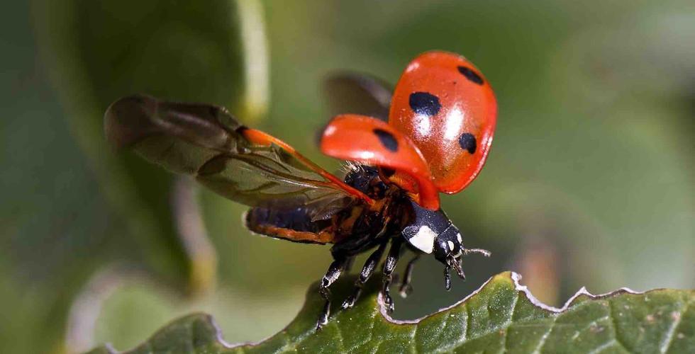 biodiversity-landing6.jpg