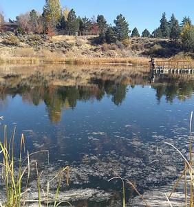 Ponds Today