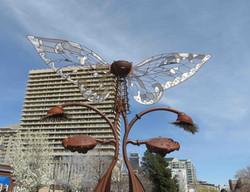 Butterfly Wingfield Park (low)