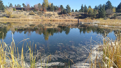 Truckee Meadows Parks Foundation Reports