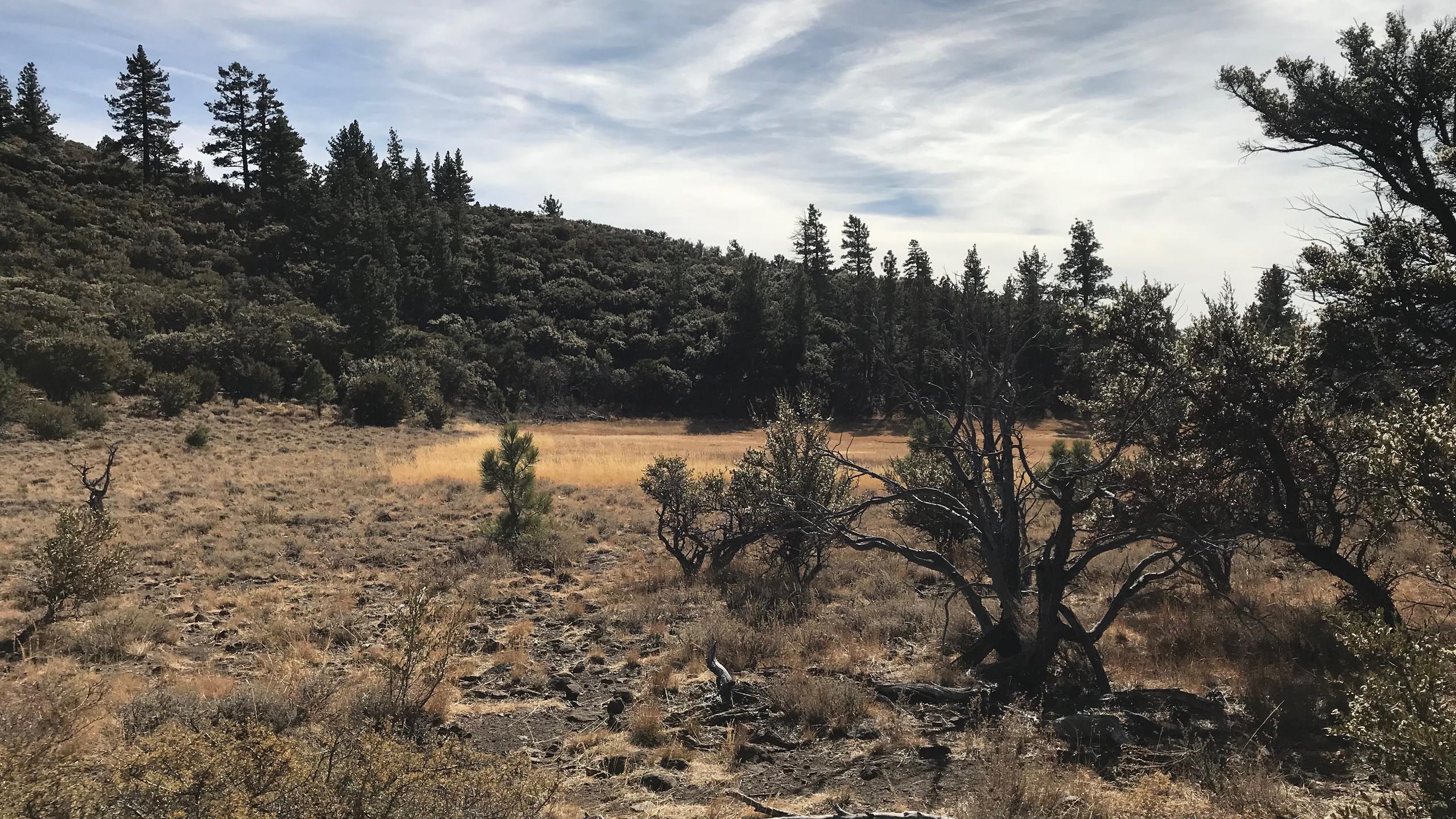 Dry Pond Trail