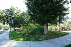 1 Bicentennial Park Site 1 Autumn 2015 (low)